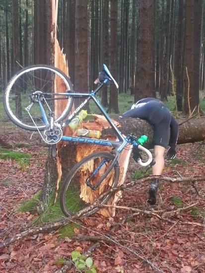 Zu schnell im Wald