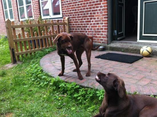 Die Hunde von Deutsch-Nienhof