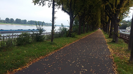 Rheinuferweg Kölle 9.10