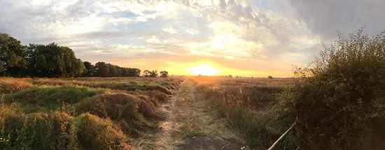 MdRzA Sonnenaufgang bei Tollerton
