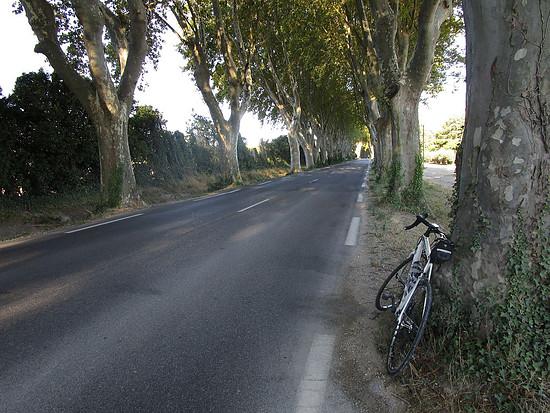 Platanenallee bei St.-Remy-de-Provence