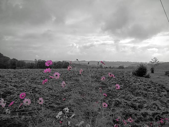 Pink vs. Grau