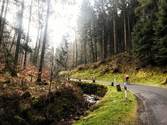 Ostermontag durch den Wald