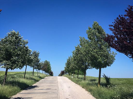 Typische Allee in Mecklenburg - die Runde ist flach bis hügelig