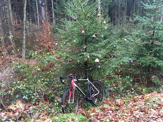 Da wächst ein fertiger Weihnachtsbaum mitten im Wald