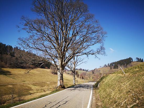 Mittelheubronn / Südschwarzwald