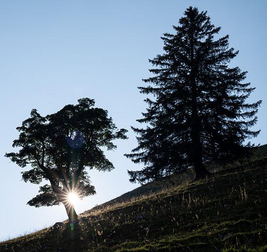 Baume im Gegenlicht