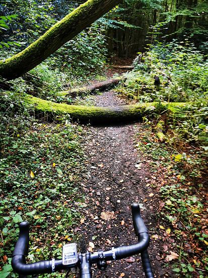 Im Wald - und hopp
