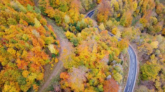 Herbstlicher Harz