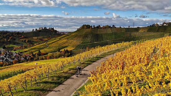 Herbst in den Stuttgarter Weinbergen