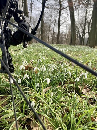 Frühling kommt......