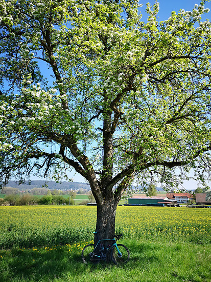 Bianchi mit Baum
