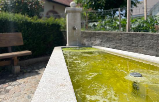 Brunnen in Wallbach