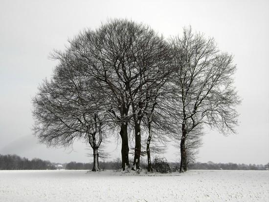 Winterwunderland Polsum