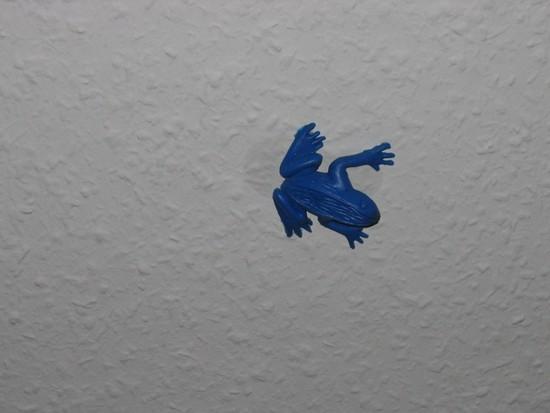 Blauer Froschn unter der Decke
