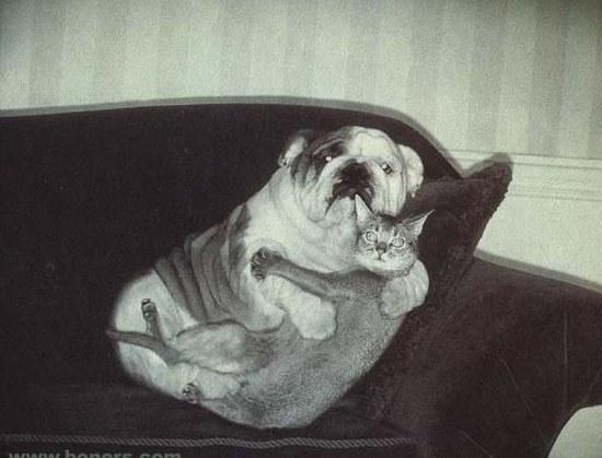 catanddog
