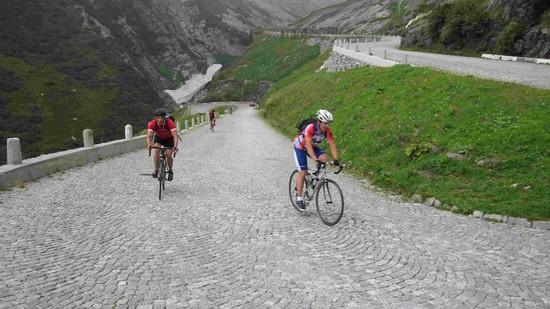 Bergzicken am Gotthard